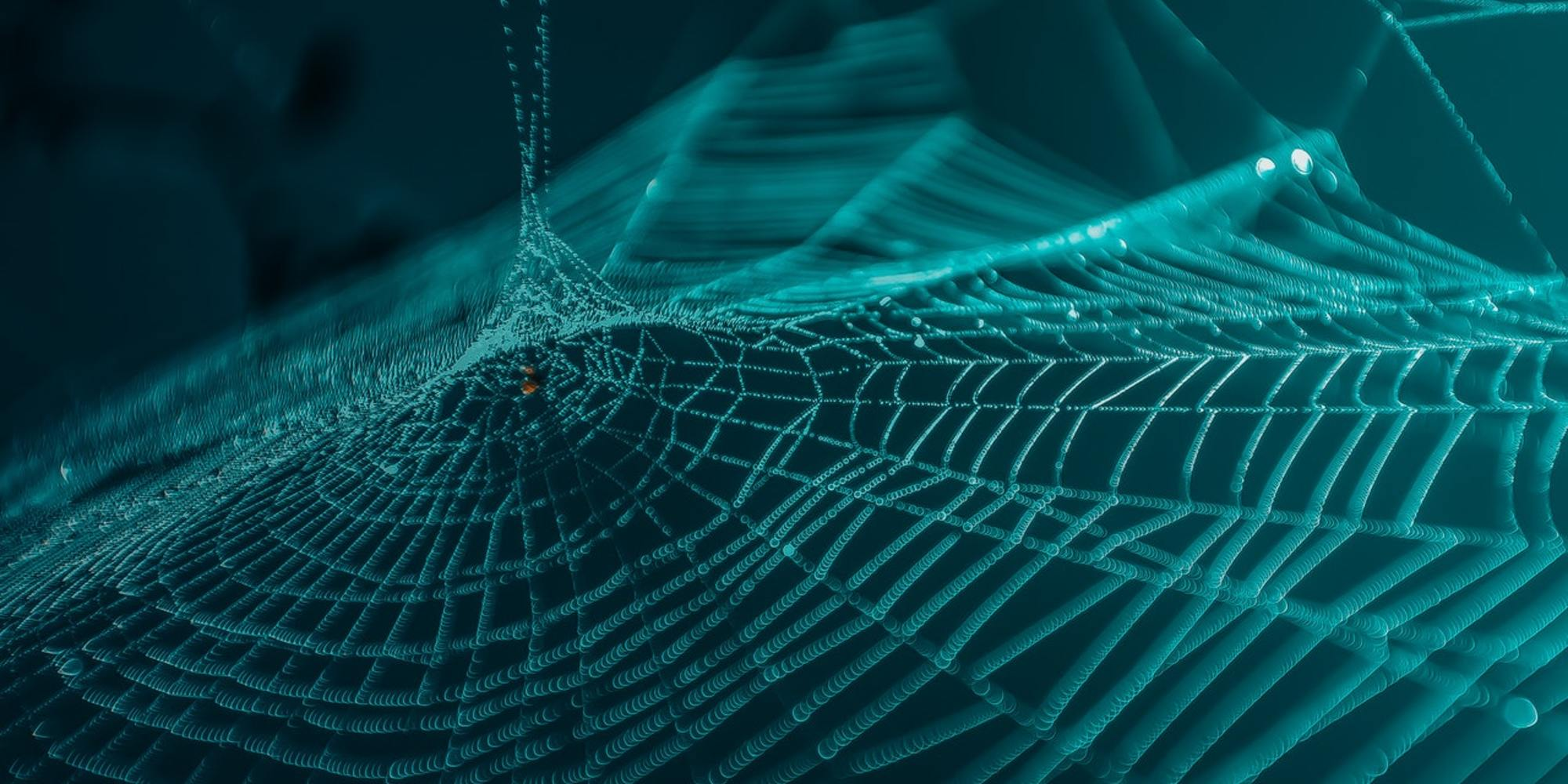 Arachnid Close Up Cobweb 2632059