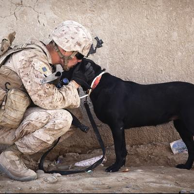 Soldier And Black Dog Cuddling 34504